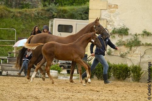 CHAMPION DES FOALS MALES SECT3